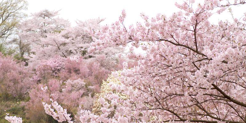 桜山イメージ